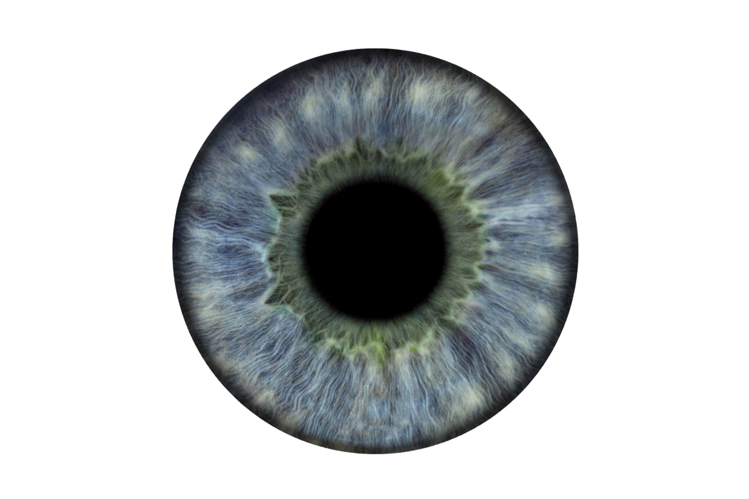 Ergo Iris